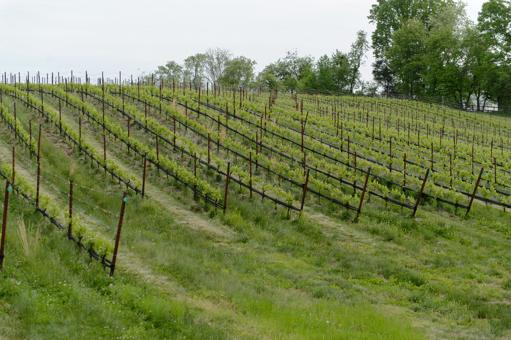 The Vineyards at Dodon Tour and Tasting, MD